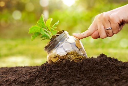 השקעה בקרקע חקלאית